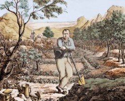"Napoleon the ""Gardener of Saint Helena"". Print enhanced by an unknown author © Stefano BIANCHETTI / BRIDGEMAN IMAGES"
